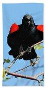 Red Wing Blackbird 1 Beach Towel