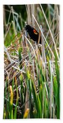 Red-winged Black Bird In The Cattails Beach Towel