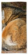 Red Wolf Beach Towel