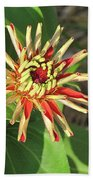 Red Zinnia- Early Bloom Beach Towel