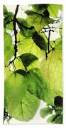 Catalpa Branch Beach Towel