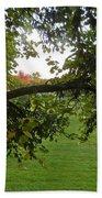 Redbud Tree In Autumn Beach Towel