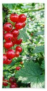 Redcurrant Berries Beach Towel