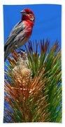 Redheaded Tree Topper Beach Towel