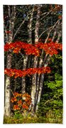 Reds And Greens Beach Towel