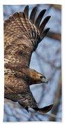Redtail Hawk Beach Towel by Bill Wakeley