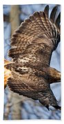 Redtail Hawk Square Beach Towel by Bill Wakeley