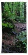 Redwood Forest Scene 1 Beach Towel