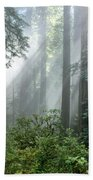 Redwood Forest With Sunbeams Beach Towel