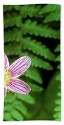 Redwood Sorrel Wildflower Nestled In Ferns Beach Towel