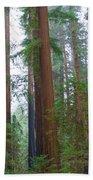 Redwood Trees Beach Towel