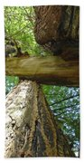 Redwoods Forest Art Prints Canvas Framed Redwood Trees Beach Towel