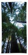 Redwoods II Beach Towel