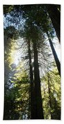 Redwoods IIII Beach Towel