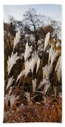 Reeds Highlighted By The Sun Beach Towel