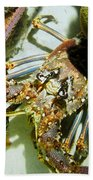 Reef Lobster Close Up Spotlight Beach Towel