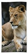 Reflections Of A Lioness Beach Towel