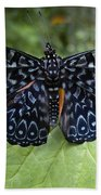 Regal Blue Butterfly Beach Towel