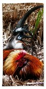 Relaxing Rooster Beach Towel