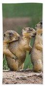 Relaxing Utah Prairie Dogs Cynomys Parvidens Wild Utah Beach Towel