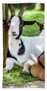 Resting Goats Beach Towel