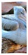 Resting Great White Pelican Beach Towel