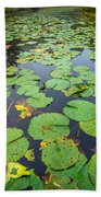 Resting Lilly Pads Beach Towel