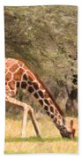Reticulated Giraffe Drinking At Waterhole Kenya Beach Towel