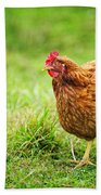 Rhode Island Red Chicken Beach Towel