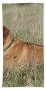 Rhodesian Ridgeback Dog Beach Towel