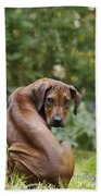Rhodesian Ridgeback Puppy Beach Towel