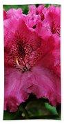 Rhododendron ' Bessie Howells ' Beach Towel
