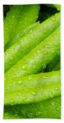 Rhododendron Leaves Beach Towel