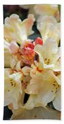 Rhododendron Nancy Evans Beach Towel
