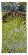 Rice Paddy Beach Towel