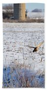 Ring Neck Hens Escape Beach Towel