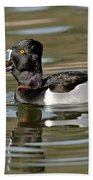Ring-necked Duck Swallowing Snail Beach Towel