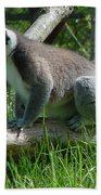 Ring Tailed Lemur Beach Towel