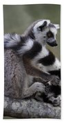 Ring-tailed Lemur Lemur Catta  Beach Towel