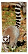 Ring-tailed Lemur Lemur Catta Walking Beach Towel