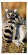 Ring Tailed Lemur Beach Towel