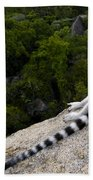 Ring-tailed Lemur Resting Madagascar Beach Towel