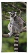 Ring-tailed Lemur Sitting Madagascar Beach Towel