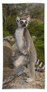 Ring-tailed Lemur Standing Madagascar Beach Towel