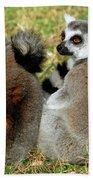 Ring-tailed Lemurs Lemur Catta Beach Towel
