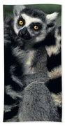 Ringtailed Lemurs Portrait Endangered Wildlife Beach Towel