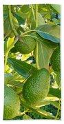 Ripe Avocado Fruits Growing On Tree As Crop Beach Towel