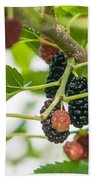 Ripe Mulberry On The Branches Beach Towel