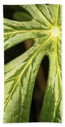 Rising Star The Mayapple Of Spring Beach Towel