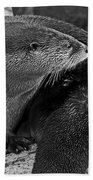River Otter In Black And White Beach Towel